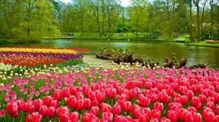 Jardins de Tulipas na Holanda - Campos de Tulipas na Holanda - Como visitar o Keukenhof Gardens - Jardim de Tulipas na Holanda - Onde ver as plantações