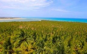O que fazer na Praia do Gunga, Maceió - Alagoas - Passeio pelas falésias da Praia do Gunga - Como chegar na Praia do Gunga em Maceió - Alagoas