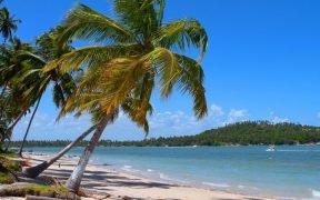 O que fazer na Praia dos Carneiros - PE Como chegar na praia dos Carneiros