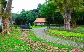 Bosque do Papa Curitiba atrações turísticas dicas o que fazer