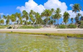 O que fazer na Praia do Francês - Pontos Turísticos na Praia do Francês - Onde ficar na Praia do Francês - Pontos de Interesse na Praia do Francês