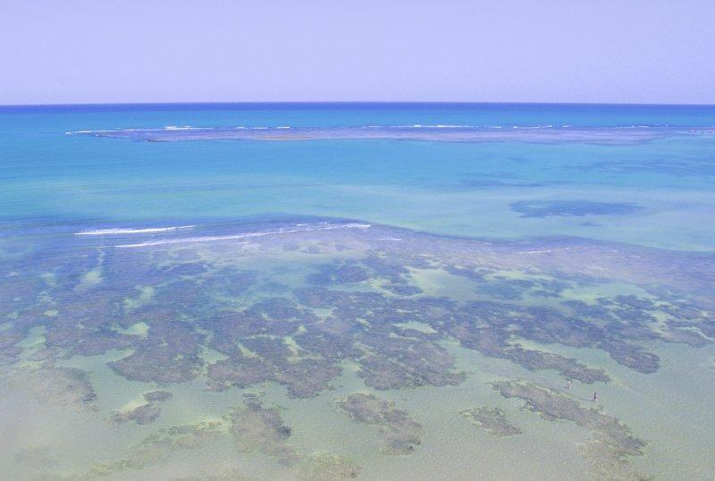 Melhores piscinas naturais de Alagoas - Piscinas naturais mais bonitas de Alagoas - Passeios de barco as piscinas naturais de Alagoas - Nordeste