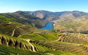 Saiba onde ficar no Douro. Aqui, selecionamos os melhores hotéis para se hospedar no Douro Vinhateiro. Aproveite as nossas dicas e sugestões!