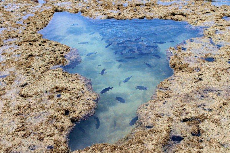 Visitar as piscinas naturais de Porto de Galinhas