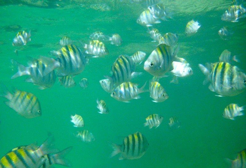 piscinas naturais em Maceió